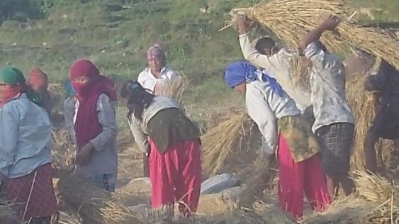 A whole village activity