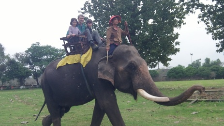 Finally got to go on an elephant.