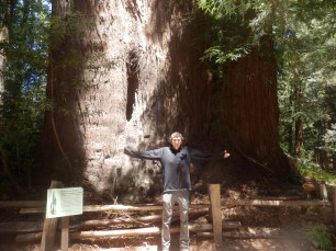 Big Redwood.